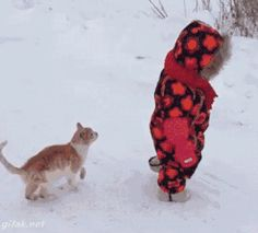 Kitten attacks and takes down it's prey...