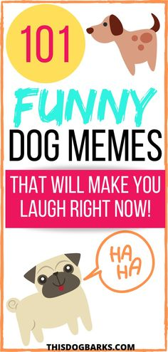 Need a laugh today? Check out this collection of funny dog memes from around the internet. We think it will brighten your day! Yorkie Puppy, Chihuahua Puppies, Funny Dog Memes, Funny Dogs, French Bulldog Breed, French Bulldogs, Corgi Breeds, Big Dog Little Dog, Boston Terrier Dog