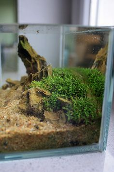 595 best aquascaping inspiration images fish tanks nature rh pinterest com