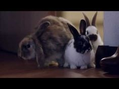 Bunnies Snuggle on a Hotel Bed in the Year's Most Shamelessly Adorable Commercial - Ibis Hotels