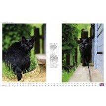 Whiskas - Glückspelz(chen) - HEYE Verlag - Kalender 2016