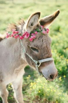 I love this donkey SO much. 🌺get in my life, donkey