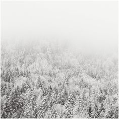 black and white snow winter trees photo print - whimsical fine art... ($40) ❤ liked on Polyvore