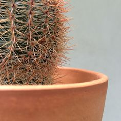 Learn what makes a cactus a cactus at Leaf and Clay!