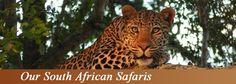 Djuma Safarilive/WildEarth Safari discount packages