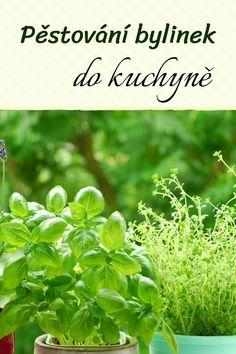 Herbs, Balcony, Herb, Medicinal Plants