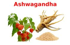 Ginsengul indian, tonic nervos si intensificator al memoriei in Alzheimer Indian, Plant