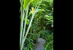 Raymond Jungles » Lazenby Garden