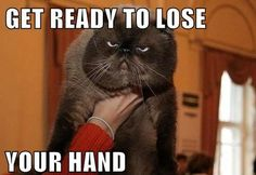 funny, cat, funny cats, funny pictures, funny photos, hilarious, Grumpy Cat