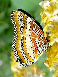 Love the markings and colors on this butterfly.