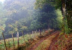 Haute-Vienne, chemin du Mont Gargan, dans la brume by jeanpierreossorio, via Flickr