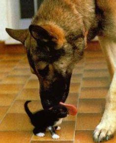 Lustige Tierfotos - HausTierSuche.at - Private Tierschutzinitiative