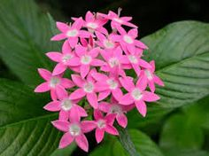 tropical flowering plants - Google Search