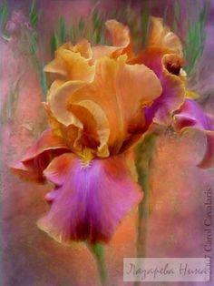 Gallery.ru / Фото #14 - Потрясающие цветы от Кэрола Каваларис - ninatela