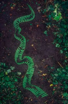 Andy Goldsworthy. Bracken stripped down one side pinned to ground with   silvers of bracken stalks  Brough, Cumbria  5 September 1982