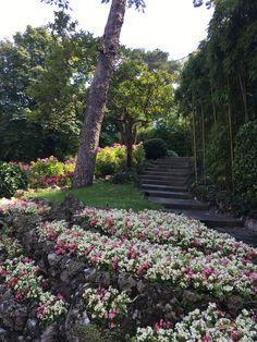 Lake Como, Hotels, Italy, Interior Design, Luxury, Plants, Nest Design, Italia, Home Interior Design