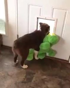 Cute Funny Dogs, Cute Funny Animals, Funny Farm, Cute Animal Videos, Cute Animal Pictures, Cute Puppies, Dogs And Puppies, Doggies, Gato Gif