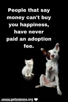 Pin On Pet Inspiration