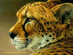 Acrylic painting - A Cheetah to Admire / Canvas Giclée - African Cheetah by Linda Rossin