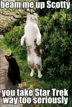 Beam me Up, Kitty!