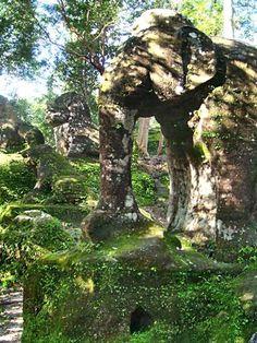Treasures of the Cambodian jungle