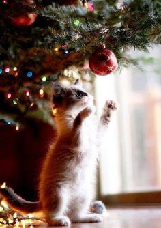 Kittens: Christmas is so much fun . . .
