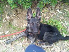 Pippo, 4 mesi