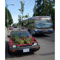A car sits on the street with a garden growing where the engine should be in Vancouver.