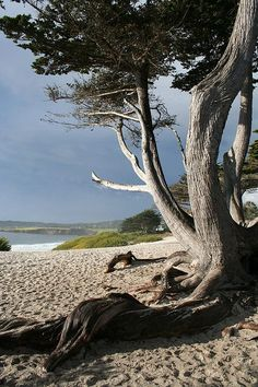 Carmel, California - this doesn't show how sugar-white the beach really is.