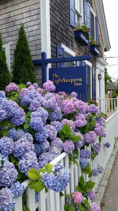 Cape Cod Cottage, Nantucket Cottage, Nantucket Island, Hortensia Hydrangea, Hydrangea Garden, Budget Friendly Honeymoons, Beautiful Flowers, Beautiful Places, Coastal Gardens