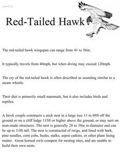 hawk, red-tailed hawk, habitat, science, natural science, interactive, 1st grade, 2nd grade, worksheet, handout, printable, Earth, homeschool, independent study, stay at home mom, curriculum, lesson plan, teach, learn, activity, fun, adventure, explore, hike, walk, writing, reader, reading, read, questions, research