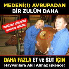 Daha çok süt için hayvanlara işkence ediyorlar!