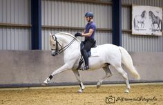 Extended trot by Bas de Recht and pré stallion Lebrero.  Picture by #HUiterwaalFotografie