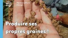 Pourquoi et comment produire ses propres graines ? Permaculture Design, Earthship, Plantation, Compost, Agriculture, How To Dry Basil, Herbs, Organic, Gardening