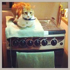 Donatello, cuidando la cocina