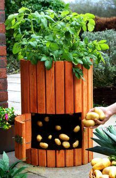 Qualitativ hochwertiger Kartoffelfässer aus Holz Pflanztopf Pflanzen Kräutertopf | Garten & Terrasse, Pflanzzubehör, Körbe, Blumentöpfe & -kästen | eBay!