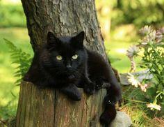 ❤️❤️❤️ BLACK CATS ❤️❤️❤️