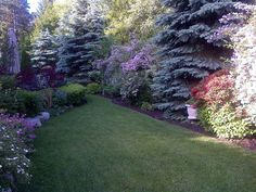 beautiful woodland garden