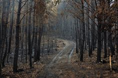 Child Of The Ancient Forest - Autumn forest (Czech Republic) by David Charouz. Autumn Forest, Dark Forest, Coraline, Haikyuu, Ju Jitsu, Night In The Wood, Over The Garden Wall, Southern Gothic, Imagines