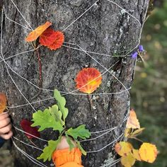 What a fun fine motor skill exercise that includes displaying the children's outdoor treasures! Forest School Activities, Outside Activities, Outdoor Activities For Kids, Autumn Activities, Outdoor Learning Spaces, Outdoor Education, Outdoor Classroom, Reggio Classroom, Outdoor Nursery