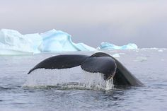 1000 Images About Whale Tales On Pinterest A