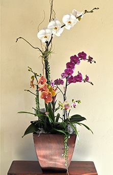 contemporary arrangement with orchid plant - Google Search