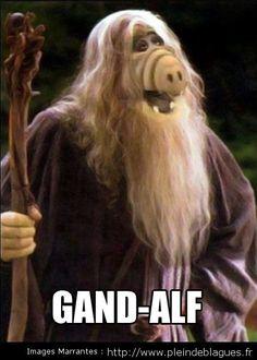 gandalf   On a retrouvé Gandalf du seigneur des anneaux! - PleindeBlagues.fr ...
