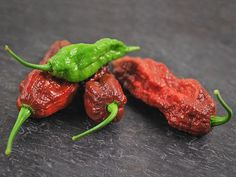 Chocolate Bhut Jolokia Hot Pepper | Baker Creek Heirloom Seed Co