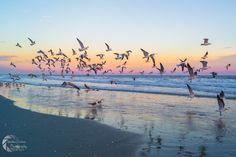 Birds at Surfside Beach - Matthew Trudeau Photography
