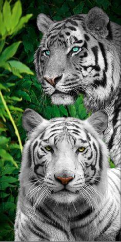 Jungle Tigers Beach Towel