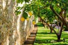 Hotel Lemongarden, Brač: silent flow - LIFESTYLEHOTELS Croatian Islands, Finnish Sauna, Chromotherapy, Paradise Garden, Orange Essential Oil, Old Stone, Strong Body, Qigong, Fishing Villages