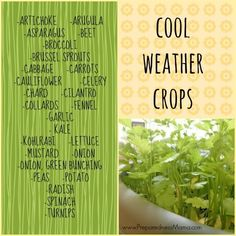 Cold Weather Crops  – When Can I plant those? Oh yeah, now!