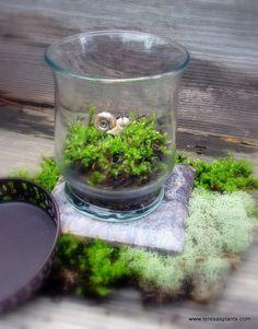 Terrarium Ideas and Inspiration {Easy DIY Ideas for Indoor Gardens} - bystephanielynn