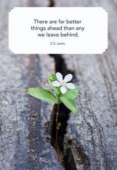 These best quotes about change and growth will help you get through life's toughest obstacles. These inspiring sayings will help you feel more positively about life changes and new chapters. Mahatma Gandhi, William Shakespeare, Shakespeare Quotes, Osho, Meaningful Quotes, Inspirational Quotes, Motivational Quotes, Change Mindset, Writer Quotes